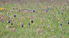 Grass and flowers sway in the wind - stock footage