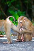 Family of monkeys - stock photo