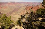 Stock Photo of juniper snag, looking north over the grand canyon