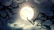 Stock Video Footage of Flying bats in the light of spooky Moon -LOOP