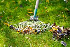 Cleaning green lawn from fallen leaves Stock Photos