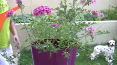 Watering the flowers Stock Footage