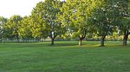 Stock Photo of park panorama with trees and field.