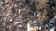 Stock Video Footage of Litter in bushes top view trekking 2