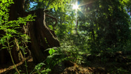 Stock Video Footage of Motion dolly time lapse shot in the forest