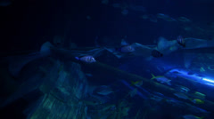 Fishes swimming around sunk ship Stock Footage