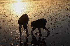 children are playing in the north sea at low tide - stock photo