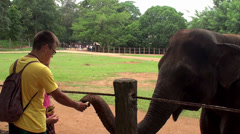 Tourists feeding the elephant by bananas Stock Footage