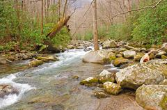 early spring in the smoky mountain - stock photo