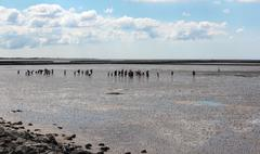 hiking in the North Sea at low tide - stock photo