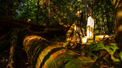 Time Lapse of Sunset shadow in the forest - stock footage