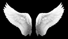Stock Illustration of Angel wing isolated