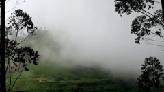 Tea Plantations in a mist at the Sri Lankan highlands Stock Footage