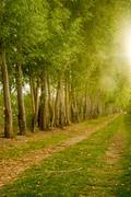 farm field path leads into distance along tree row sunlight - stock photo