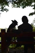 Silhouette of a dog and woman on a bench enjoying the view Stock Photos