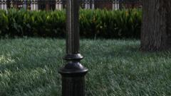 Antique Lampost Tilt Down Stock Footage
