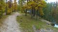Charming autumn wood. Aerial clip HD Footage