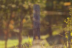 Wooden pale on country area meadow field Stock Photos