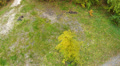 Lonely tree. Aerial clip Footage