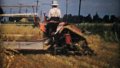 Farmers Harvesting Golden Wheat-1940 Vintage 8mm film Stock Footage