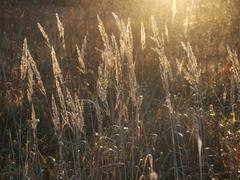 autumn grass - stock photo