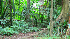 Mound near the big tree in the rainforest Stock Footage