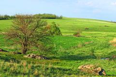 Rural landscape. Stock Photos