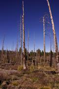 Aftermath of forest fire of 2000 Stock Photos