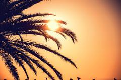 Palm tree in sunrise Stock Photos