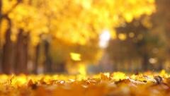 Leaf fall in the autumn city park. Beautiful background Stock Footage