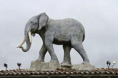 Elephant on the roof Stock Photos