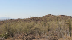 Cactus Field Pan Right with Desert Hills Stock Footage