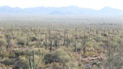 Cactus Field Desert Mountains Tilt Up Stock Footage