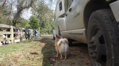 Up moving Jib shot at a farm with a dog and horse trailer Stock Footage