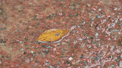 Yellow leaf on gravel Stock Footage