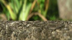 Leaf Ants V Stock Footage