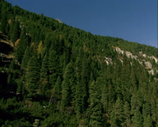 Pine woods growing up the mountain slopes + tilt down stone with hollow in river Stock Footage