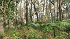 Australian 'Bush' Forest Landscape Stock Footage
