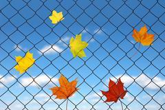 autumn leaf on a fence - stock photo