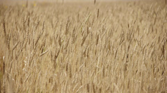 Harvest 4 Stock Footage