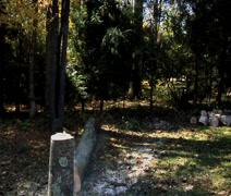 Cut Tree Falls in yard Stock Footage