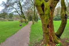 Mossy tree trunk and walkway in botanical park. Stock Photos