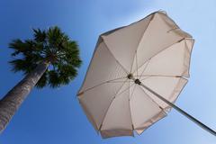 Stock Photo of Palm and umbrella