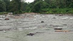 Elephant is bathing in Maha Oya river. Sri Lanka. Stock Footage