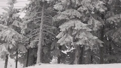 Pan right forest covered snow winter mountain tree pine fir white Stock Footage