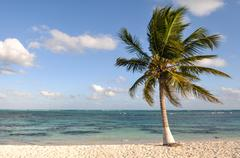 palm tree with beach and sand - stock photo