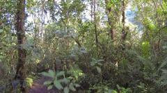 Rising up from the ground into the canopy of montane rainforest with bromeliads  Stock Footage