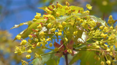 Tender greens of spring Stock Footage