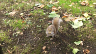 Stock Video Footage of A Squirrel Eating A Nut