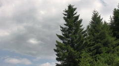 Storm clouds in the mountain forest, windy day, pine trees, landscape Stock Footage